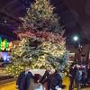 161201 Seneca Tree Lighting 1