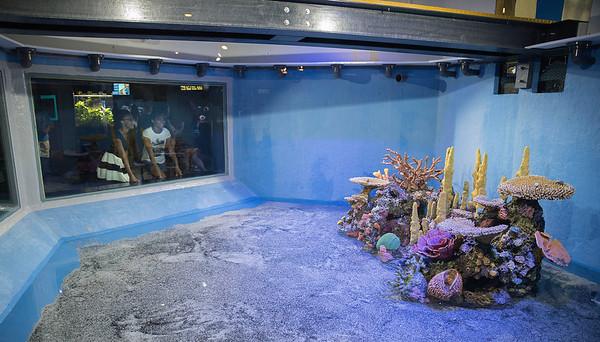 160802 Aquarium 2