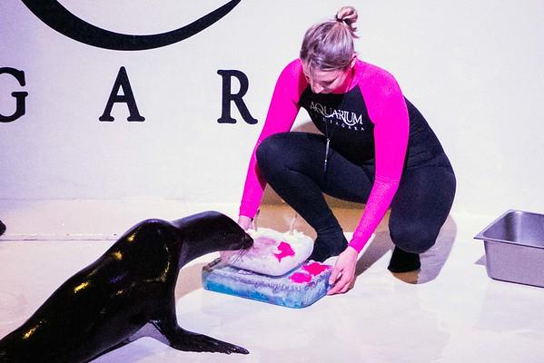160617 Aquarium debut 5