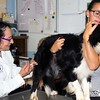 160823 SPCA Rabies Clinic 2