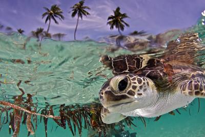 Over/Under Turtle