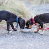 20160306 Dogs - D'Urville Trip _MG_9892