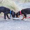 20160306 Dogs - D'Urville Trip _MG_9892
