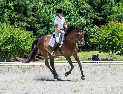 6-18-2016 Fen Ridge Dressage