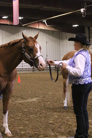 2016 Spring Into Pinto / Youth Sponsored Pinto Show