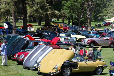 Jaguars on ;aid out and their owners enjoying the fine weather.
