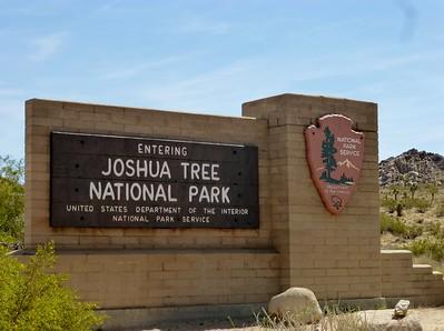 2016 Joshua Tree