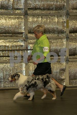 2016 July Lakeland Dog Show