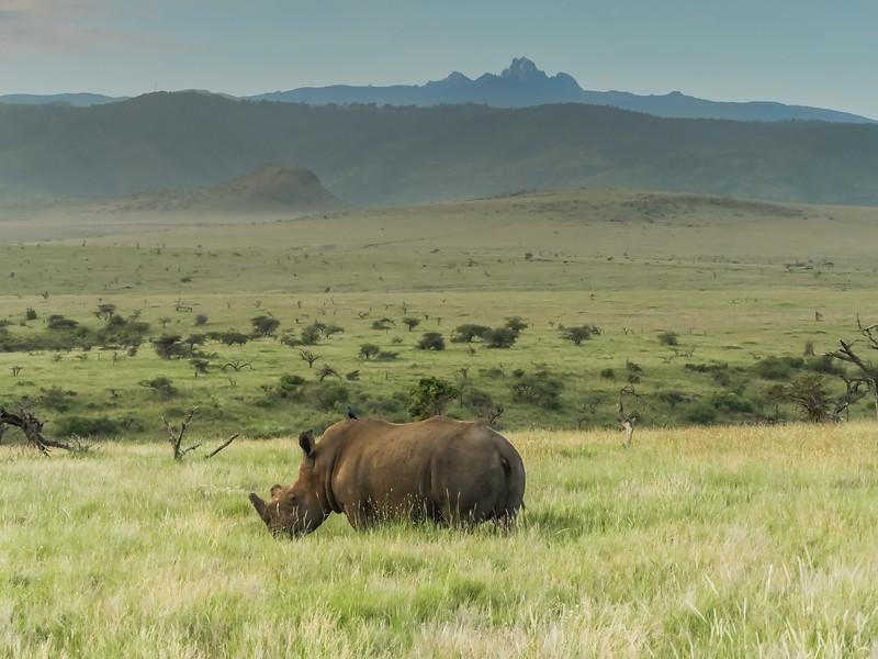 Rhino with Mt. Kenya