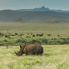 Rhino with Mt. Kenya