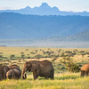 elephant with Mt. Kenya
