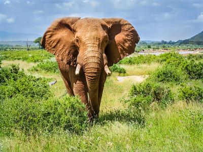 2016 Kenya - Samburu