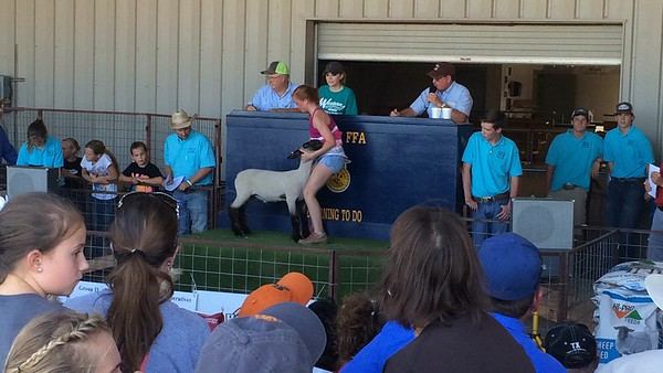 2016 Lamb and Goat Sale