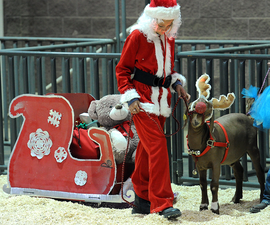 Madison Baker, 9, of Fort Collins, dressed as Santa Claus to go with her goat, Sage, who she dressed as Rudolph the Reindeer for the goat costume contest Thursday, Aug. 4, 2016, during the Larimer County Fair at The Ranch in Loveland.  (Photo by Jenny Sparks/Loveland Reporter-Herald)