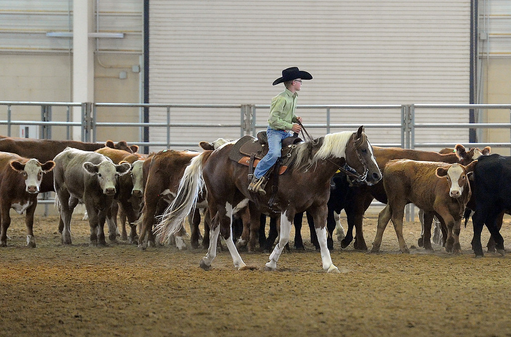 . Tyler Kraft of Fort Collins, 12, herds cattle on Tuesday, Aug. 2, 2016, before the working ranch horse class competition during the Larimer County Fair at The Ranch in Loveland. Tyler, his sister Kyli Kraft, 13, and his mom, Cheri Kraft, were getting the cows used to horses and trying to hlep them become more comfortable in the arena before the competition. (Photo by Jenny Sparks/Loveland Reporter-Herald)