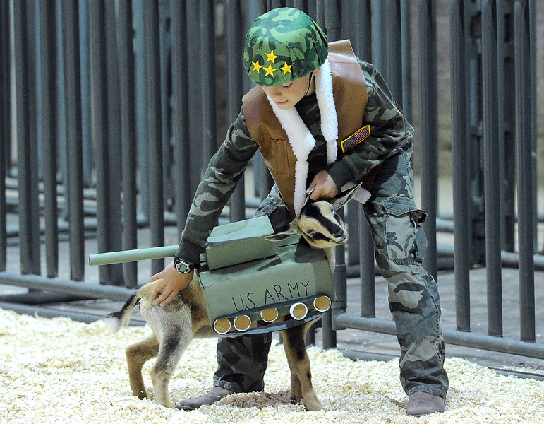 Sporting a General Patton costume, Grant Slinkard of Loveland, 10, positions his Nigerian dwarf goat, Dori, dressed as a tank, during the goat costume contest  Thursday, Aug. 4, 2016, during the Larimer County Fair at The Ranch in Loveland.  (Photo by Jenny Sparks/Loveland Reporter-Herald)