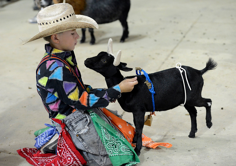 Lucille the goat tolerates the bull horns on her head as her owner, rodeo clown, Tate Shearer, 10, prepares for the goat costume contest Thursday, Aug. 4, 2016, during the Larimer County Fair at The Ranch in Loveland. (Photo by Jenny Sparks/Loveland Reporter-Herald)