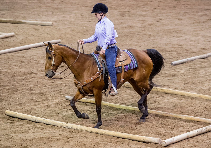 0802 NWS Fair_EquineComp_7-mb