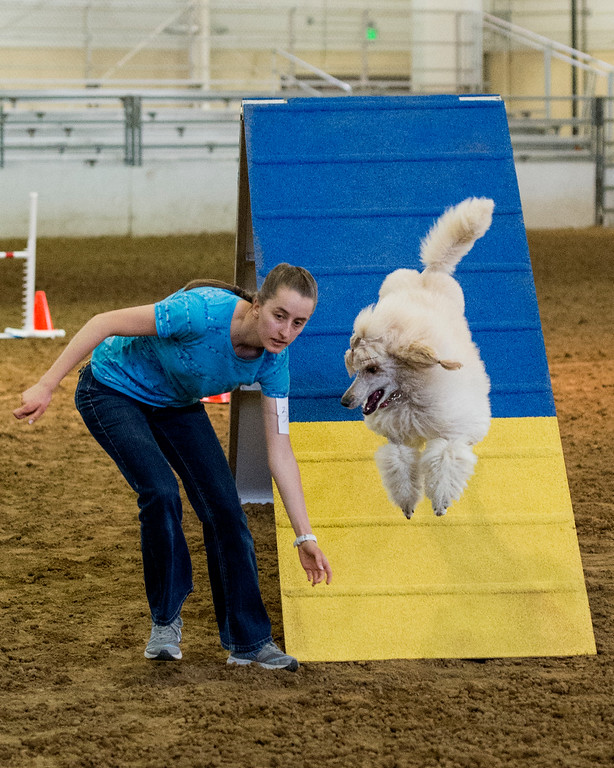 . Deborah Kurz leads her dog through an agility course Wednesday afternoon August 3, 2016 during the Larimer County Fair and Rodeo at The Ranch in Loveland. (Photo by Michael Brian/Loveland Reporter-Herald)