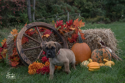 2016 Marley Pup Pete
