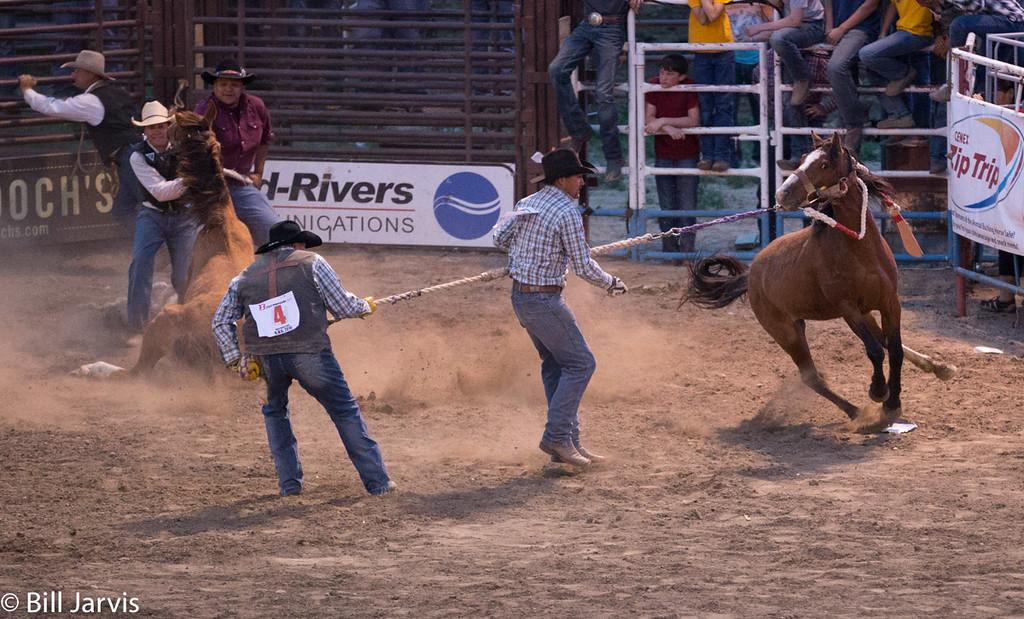 Wild Horse Races