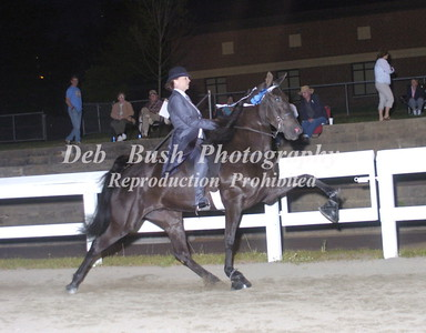 CLASS 24  FOUR YR OLD AM MARES & GELDINGS