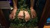 Bilbo's Harry Feet!