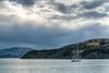 A lone sailboat in French Harbor, Akaroa.