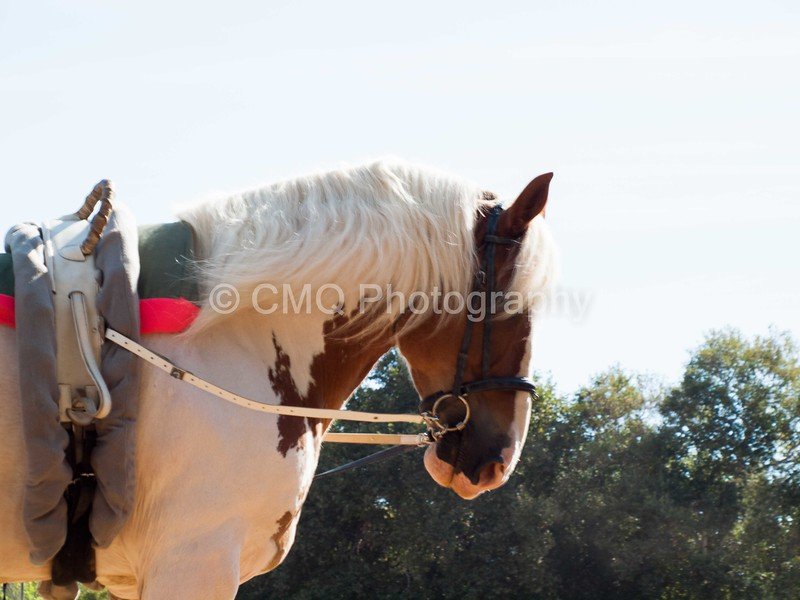 2016_Vaulting_Camelot_(1209_of_3844)