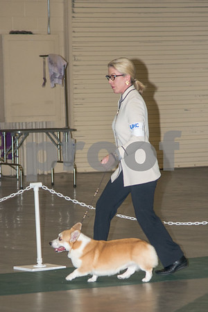 2016 Oct Hickory Dog Show