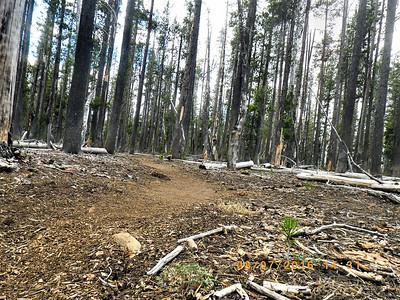 PCT Hiking Oregon