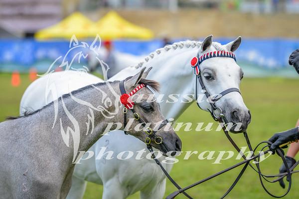 2016 Perth Roal Show Monday 26-9