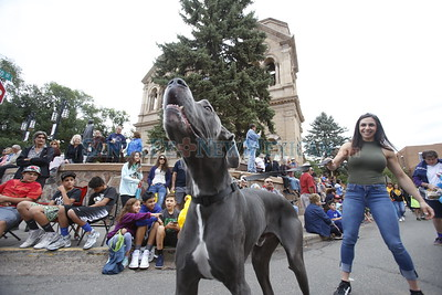 Danielle Valdez, from Santa Fe, holds on to her dog Hercules, a Great Dane, while they walk on the Pet Parade through downtown Santa Fe on Saturday, September 10, 2016. Luis Sánchez Saturno/The New Mexican