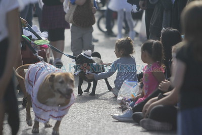 Alinah Carrillo, 4, pets Roscoe, a pug that walked by her during  the Pet Parade in downtown Santa Fe on Saturday, September 10, 2016. Luis Sánchez Saturno/The New Mexican