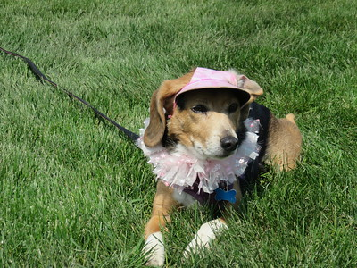 2016 Pet Promenade and Party in the Park
