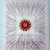 AlyciaC-Shutter Zoom-34
