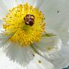 AlyciaC: Macro floral