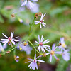 Tiny Flowers in Gratiot River North by Erica Jacobson.