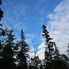 Tall Trees by Ann Kopka Ryan. Taken at Seven Mile Point