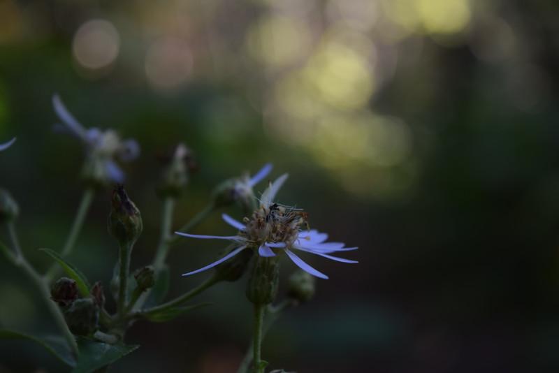 Green Light by Marika Abbott. Taken at Seven Mile Point