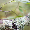 Moss on a Branch by Erica Jacobson. Taken at Gratiot River North