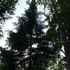 Silhouette of a Tree by Ann Kopka Ryan. Taken at Seven Mile Point