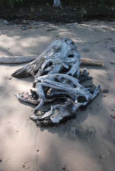 Driftwood by Eric Stewart. Taken at Seven Mile Point