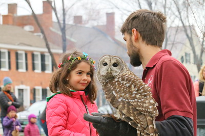 IMG_1861 madeleine barre,6, looks at a Barred Owl, held by nathan thoele of VINS; vins had a owl and hawk, and a tent with a display
