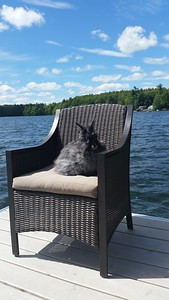 Photo was taken on West Pond in Maine while on vacation  My angora rabbit named Alzadie  - Lori Robinson of Woodstock
