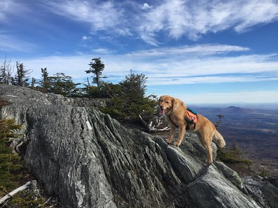Caitlin Quinn-vaida is an avid 4-legged hiker that lives in tunbridge, vt  here she is enjoying a stretch on the long trail heading up killington mountain