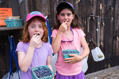 PYO Blueberries