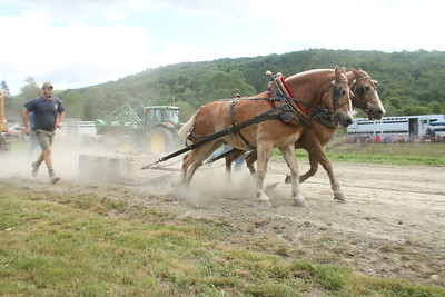 IMG_7106 jeff tracey of barnard,,,in pony pulling,,trying to pull 2800 pounds