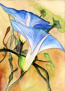IMG_8453 Morning Glory-001