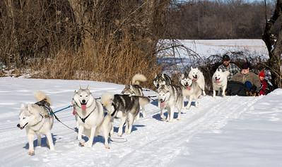 Braeburn Siberians Sled Dogs